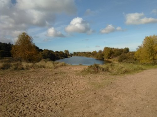 Landscape photo taken at the Amsterdamse Waterleidingduinen with the Nokia 2